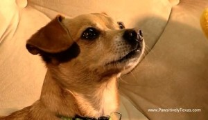 Dog Your Man Could Love Like - Old Spice Commercial Parody