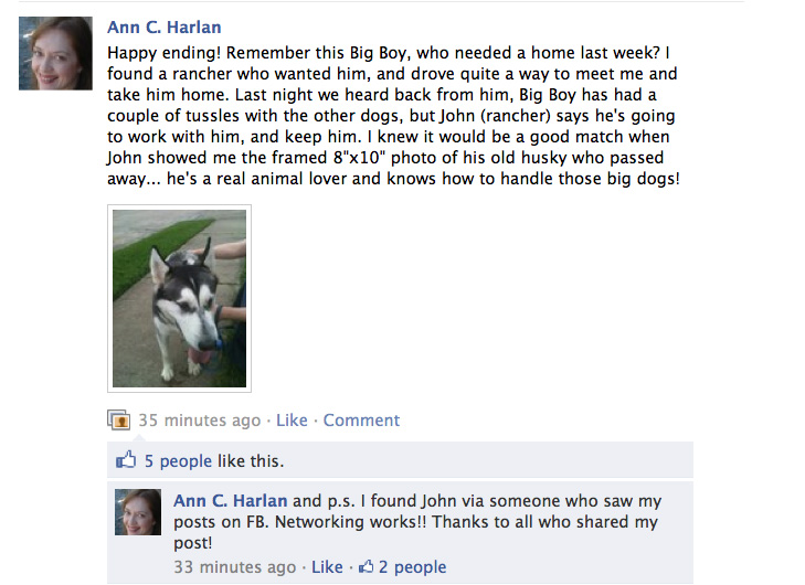 Big Boy the Husky Dog Got Adopted photo
