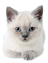 Cat Photo - Pet Abuse