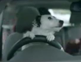 Harvey Pet Adoption Video Photo