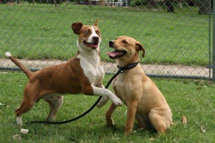 Mugsy and Shiloh stray dogs photo