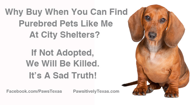 Adopt A Pet message image