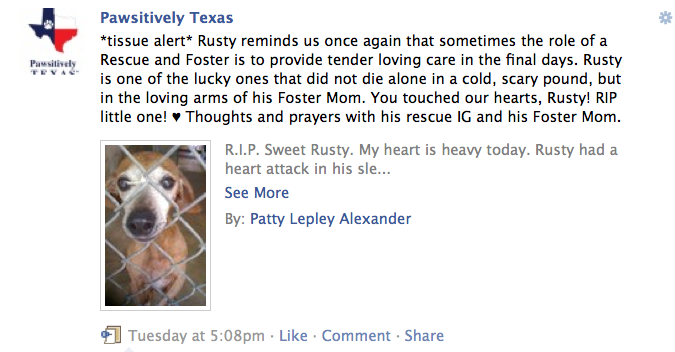 Photo of Rusty a chiweenie rescued from TLAC