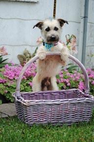 Cute Shelter Dog photo