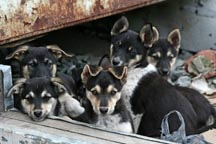 Stray Puppies photo