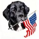 American dog photo