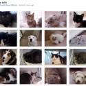 Carrollton Animal Rescue
