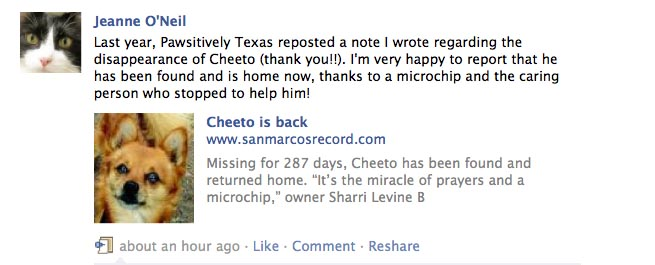 Lost dog cheetos story photo