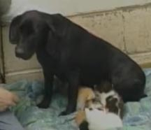 Shelter dog motherless kittens - click the arrow below to watch!