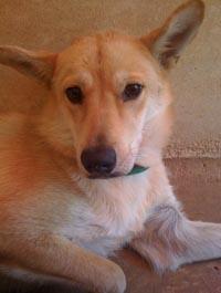 king shelter dog photo