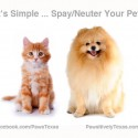 Spay Neuter Pets Dog Cat photo