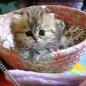 cute kitten video image