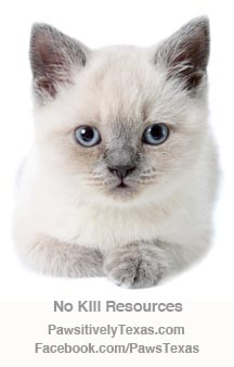 blue eyed cat image