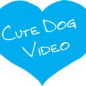 Cute Dog video icon