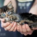 Kitten photo by Photographer Jenny Froh
