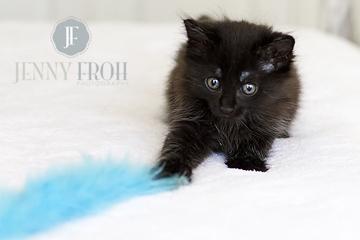 Cute black kitten photo by photographer Jenny Froh