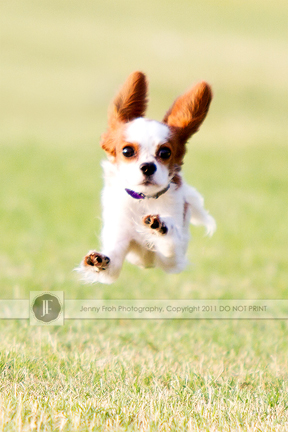 Cute puppy running photo by Jenny Froh