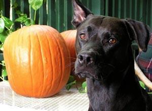 Fall pawty dog photo 2