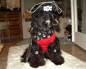 Fall pawty pirate dog photo