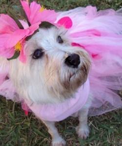 Fall pawty dog photo