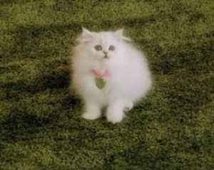 Fancy feast white cat