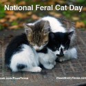 National Feral Cat Day photo