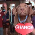 SPCA Wake County Take A Chance on me Pet Adoption Video Photo