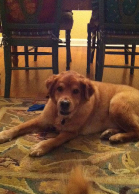 Dash, a rescue dog photo
