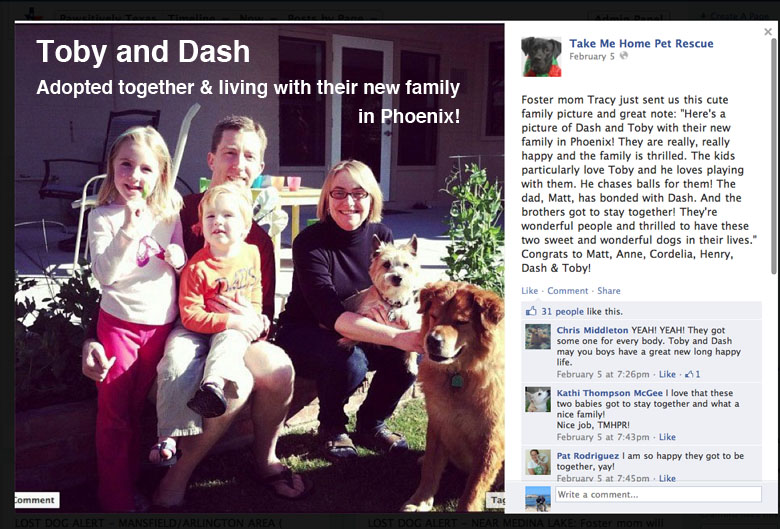 Toby and Dash, two abandoned dogs adopted together image