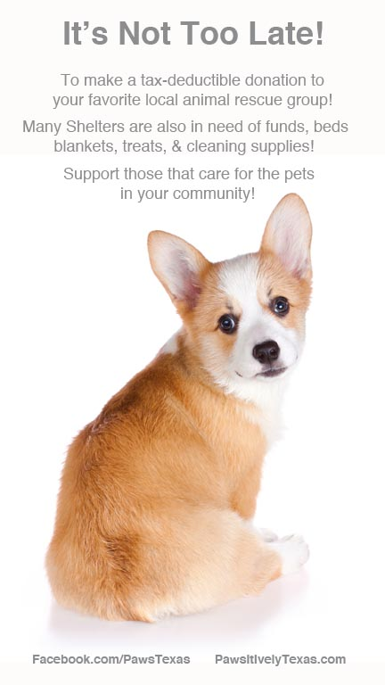 Year End Shelter Pet Support