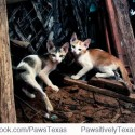 Feral_cats_pawsitively_texas_no_kill_workshop