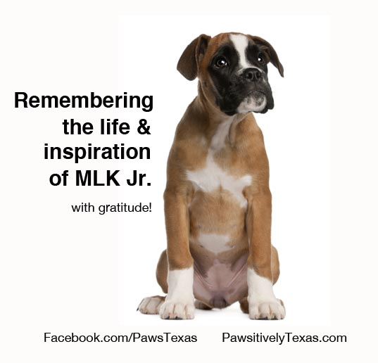 Martin Luther King Jr Tribute on Pawsitively Texas