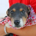 Gonzales Texas Animal Shelter dog