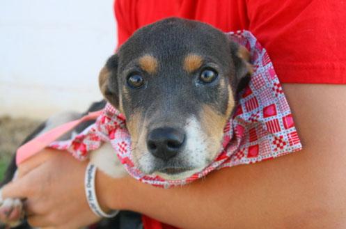 Gonzales Texas Animal Shelter dog