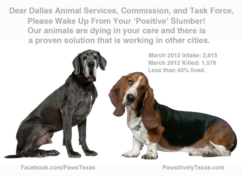 dallas animal services commission wake up pets are dying in your care