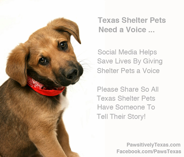 Texas shelter animals need a voice image