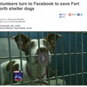 networking to save fort worth animal shelter pets