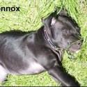 RIP_Lennox_Belfast