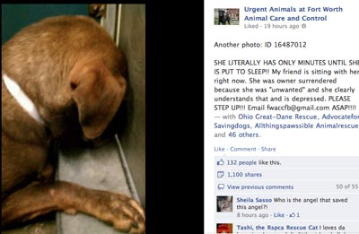 an owner surrendered dog scared and depressed at the animal shelter