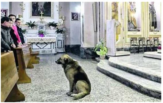 Ciccio dog attends italian mass after owner dies photo