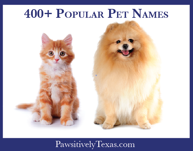 More than 400 Popular Pet Names