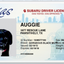 Cute Facebook app by Subaru lets you create a driver's license for your pets!