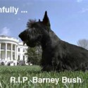 Barney Bush first dog passes away photo