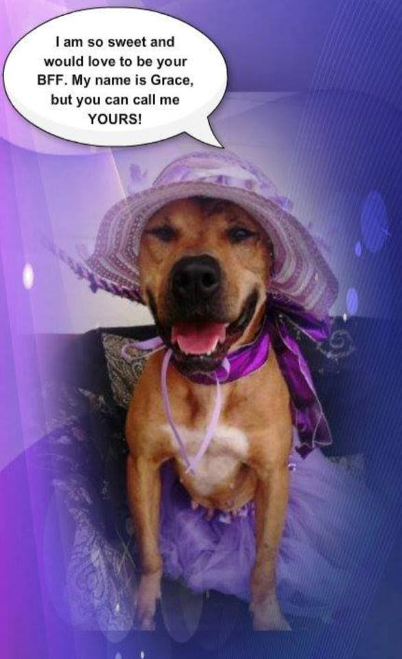 gracie dog in need of rescue pet adoption amp animal