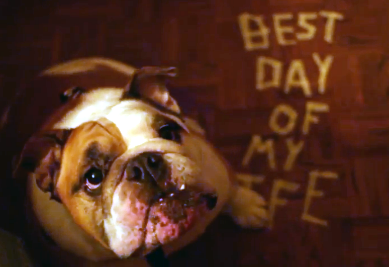 Best Day of my Life - Bulldog Adoption Video by American Authors with Georgia English Bulldog Rescue
