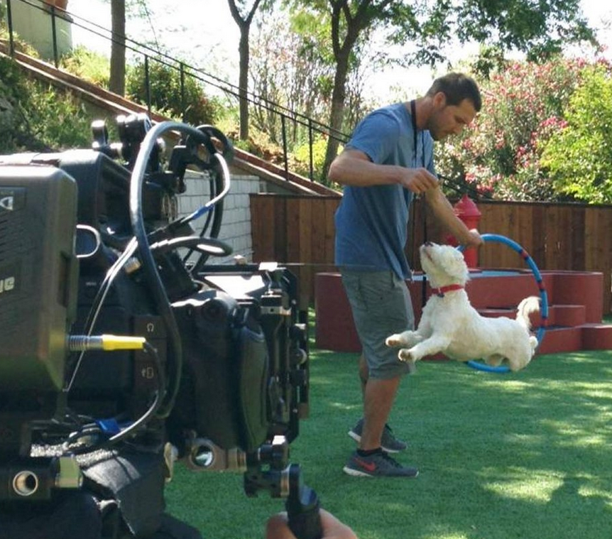 Lucky Dog a new CBS show starring rescue dogs and Brandon McMillan
