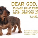 Puppy advocates for homeless animals