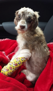 Dog in rescue after suffering horrific animal cruelty