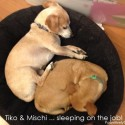 Tiko and Mischi ... two sleeping dogs