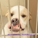 Hilarious photo helps Elvis, the shelter dog, get adopted from the Mineral Wells, Texas shelter.